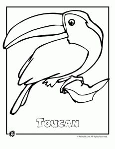 endangered rainforest touca 231x300 9 Most Endangered Rainforest Animals Coloring Pages