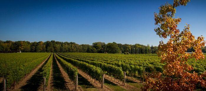 ¿Cuál es el origen del vino de calidad?