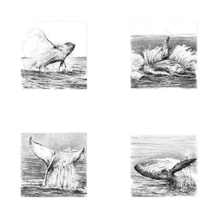 Miniature Whales on Behance