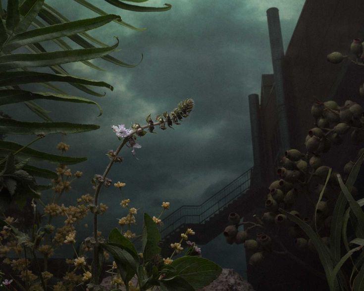Botanical Inquiry by Daniel Shipp   Yellowtrace.