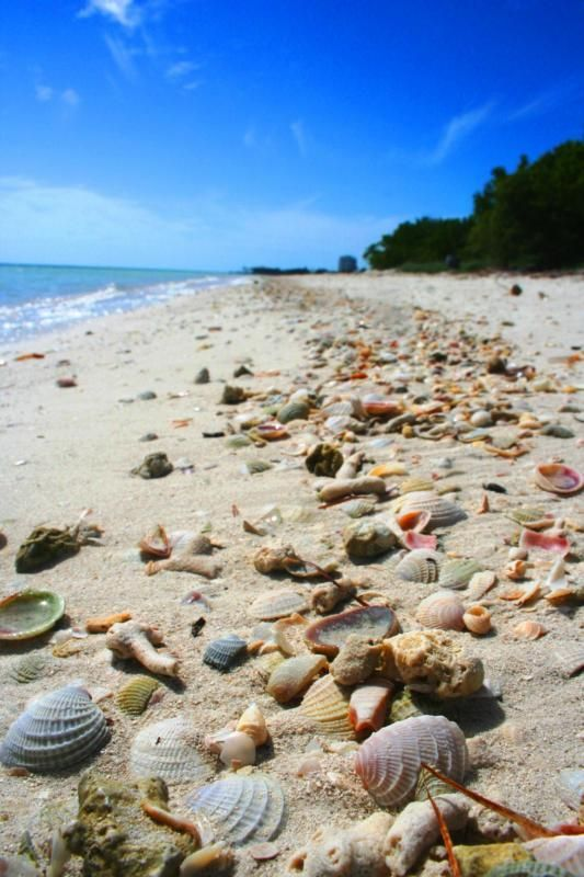 coco plum beach florida keys..... it's gorgeous, but this can't be real! how can that many sea shells just be lying on the beach untouched?