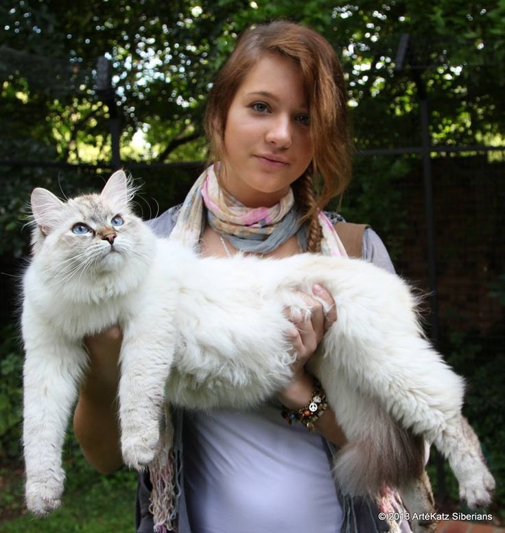 Siberian Male Cat Names