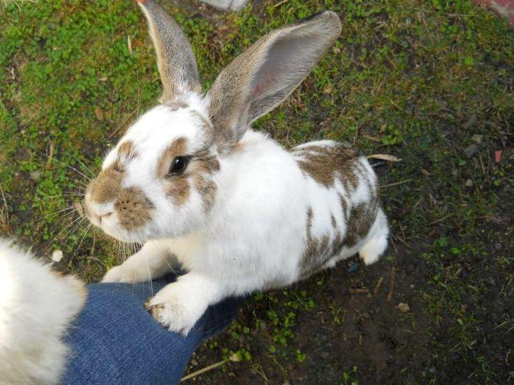training rabbits.. sweet!