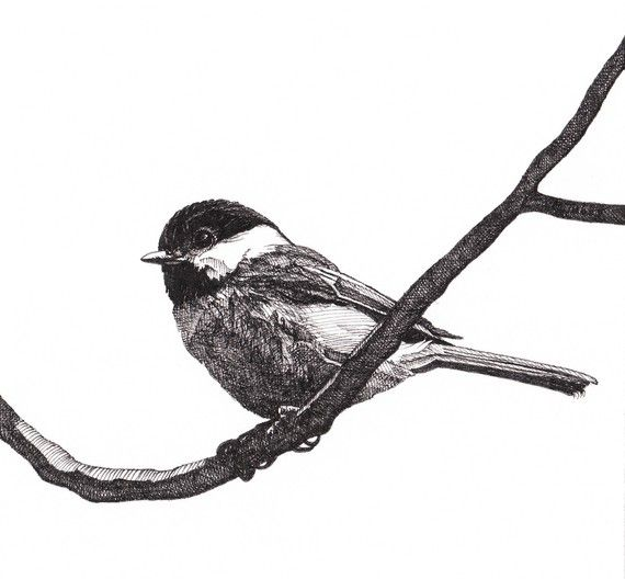Pen and Ink Drawing Reproduction Blackcapped by melissabtubbs, $35.00