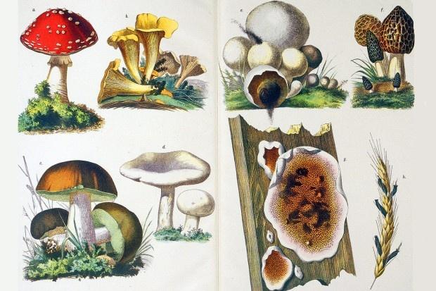 Eine Anschauungszeichnung aus eine Buch des Jahres 1891 zeigt auf der linken Seite: a. Fliegenpilz, b. Eierschwamm, c. Steinpilz, d. Champignon. auf der rechten Seite: e. Bovist, f. Morchel, g. Hausschwamm, h. Mutterkorn. In Deutschland gibt es Tausende Pilzarten - gemessen an der Gesamtzahl sind aber nur wenige essbar
