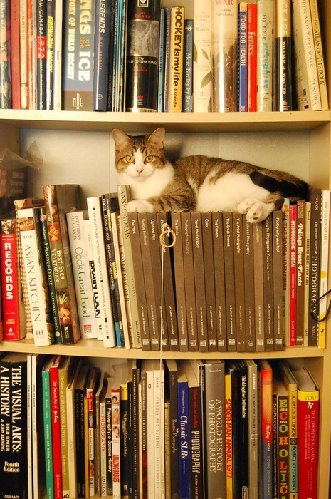 cats need comfy seats - another good reason not to buy an e-reader