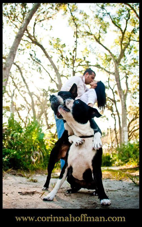 © Corinna Hoffman Photography - www.corinnahoffman.com - Engagement Session - Jacksonville, Florida - Engagement & Wedding Photographer - Boston Terriers