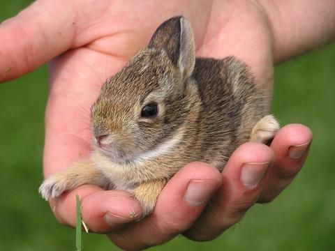 baby bunny... now here is a picture of trust!