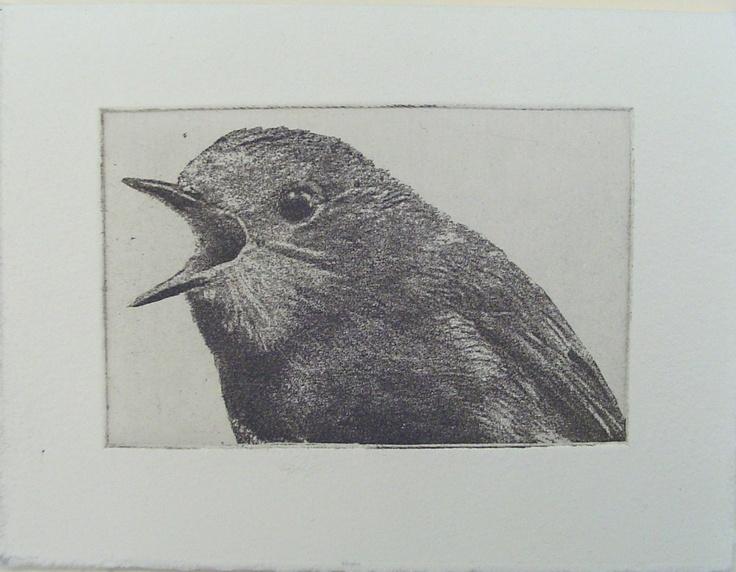 shouting bird etching