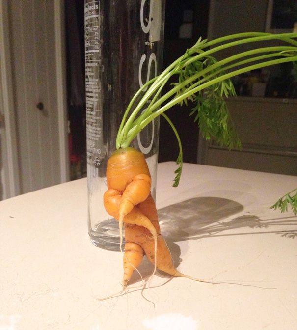 9. Zanahoria haciendo el baile de Snoop Dog.