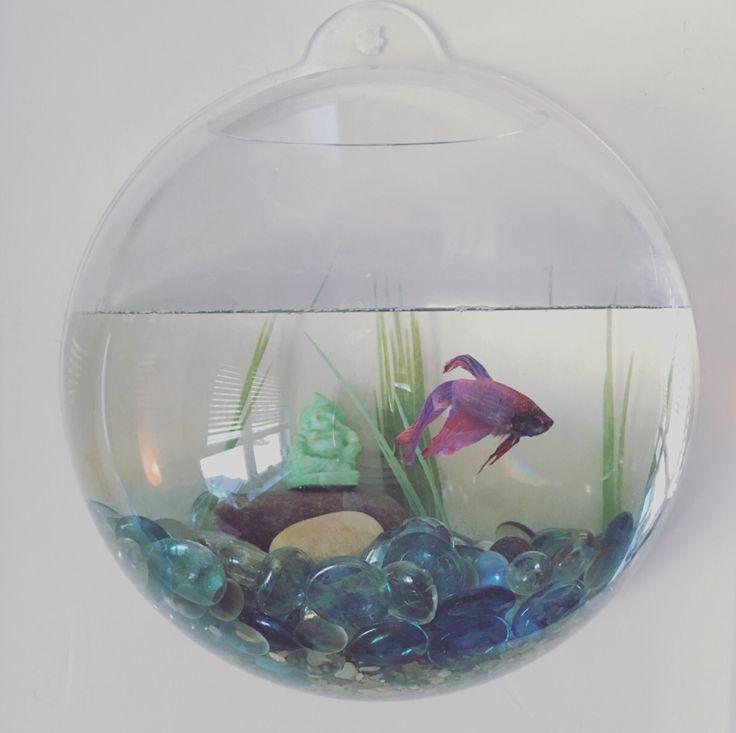I love my beta fish and his tank, an aquarium as unique as its tenant #terrarium #fishtank #homedecor fish