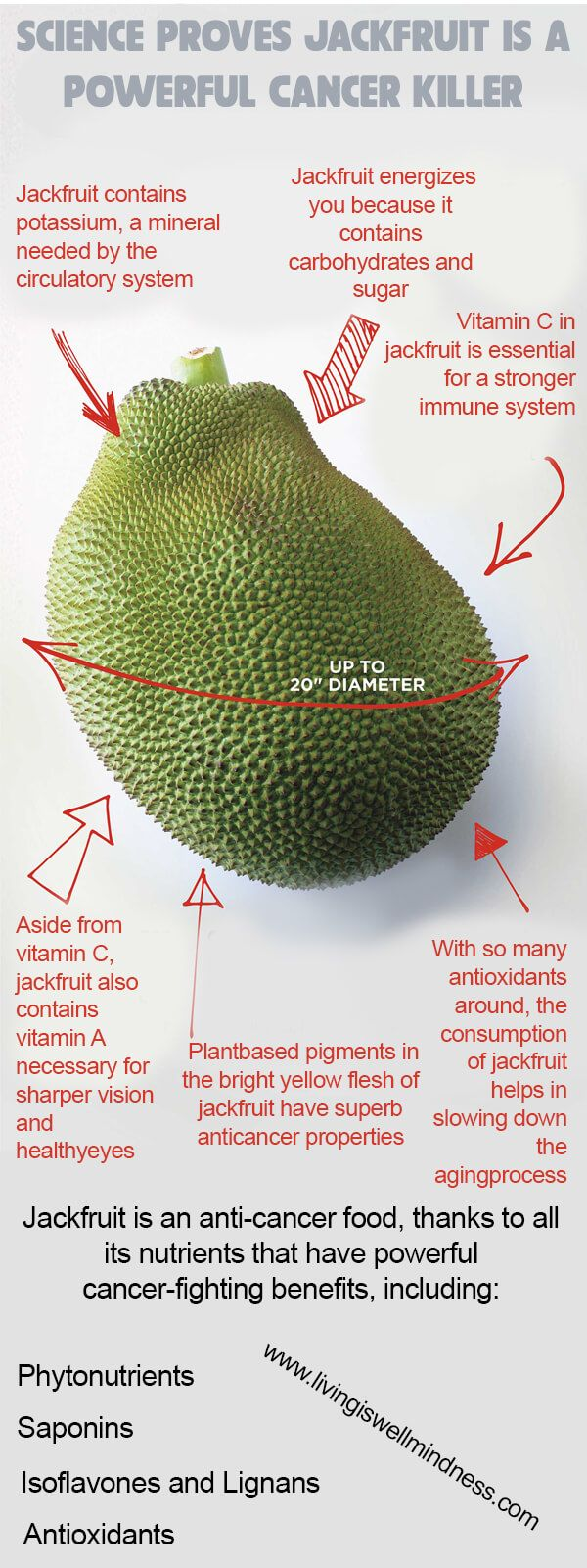 Jackfruit looks very similar to durian but it certainly doesn't smell and taste like the latter. It tastes really sweet when ripe.