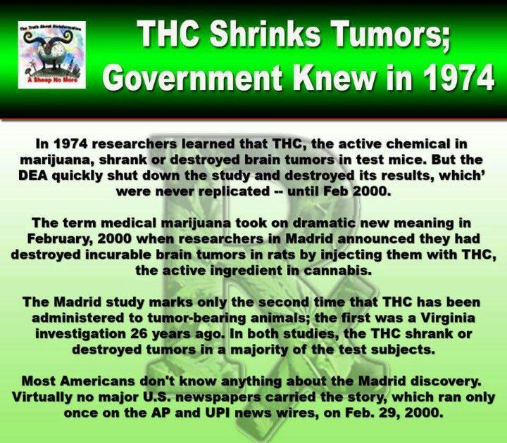 1974: THC Shrinks Cancer Tumors ... Test results hidden by DEA for 26 years. #medicalmarijuana #marijuanaprohiition www.OneMorePress.com