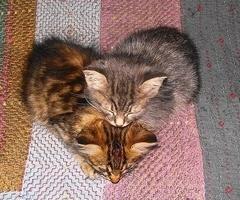 ♥ Kittens