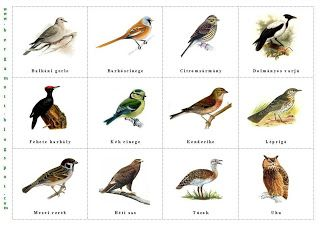 Bergamott: Itthon telelő madarak III.