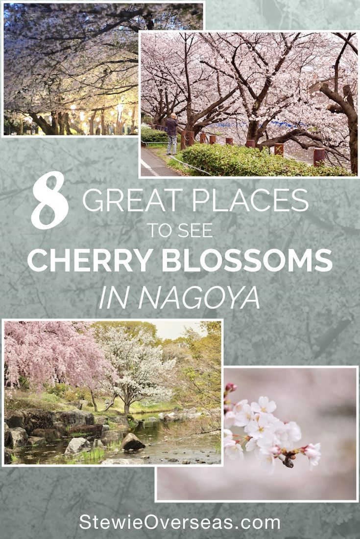 8 Great Places to See Cherry Blossoms in Nagoya - There are beautiful cherry blossoms all over Nagoya. Read about these great places in the full blog post! #japantravel #cherryblossoms #travellist #nagoyajapan