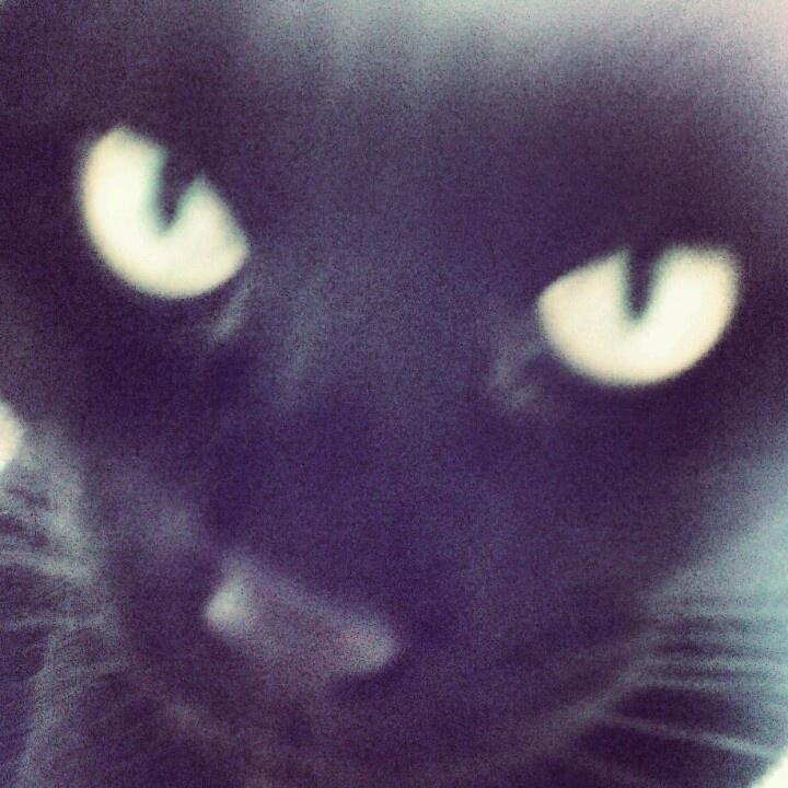 Begrip dat neerdaalt, openlijk binnenkomt en  je zonder blikken, blozen aankijkt...  - dag 12  (huiskat Babz, door Lilian)