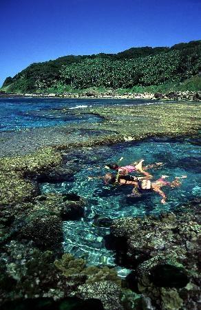 Snorkelling on Lord Howe Island #Australia http://www.tripadvisor.com.au/ShowForum-g528988-i10048-Lord_Howe_Island.html