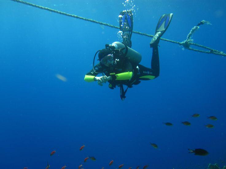 Elphinstone Reef - Red Sea
