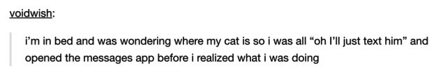 This thing that you've probably done: | 21 Tumblr Posts That Perfectly Summarise Owning A Cat
