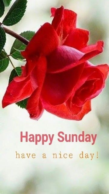 Pin By Somacha Homhual On Good Morning A Good Day Hello Sunday