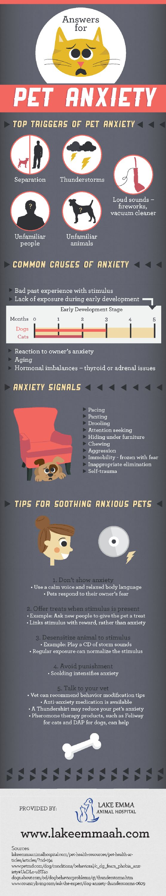 When owners are anxious, their pets may also become anxious! Using a calm voice and relaxed body language is essential for calming a pet