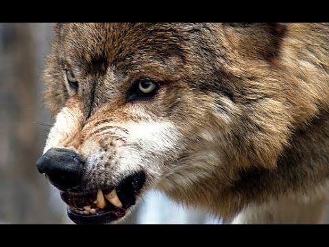 Deception Games Episode 2 - Ravening Wolves - YouTube