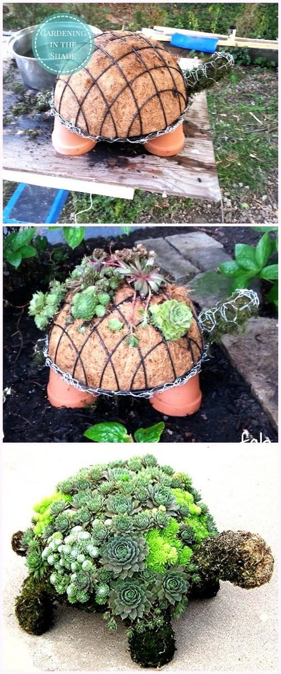 Handmade Succulent Garden Birth of A Baby Turtle Topiary
