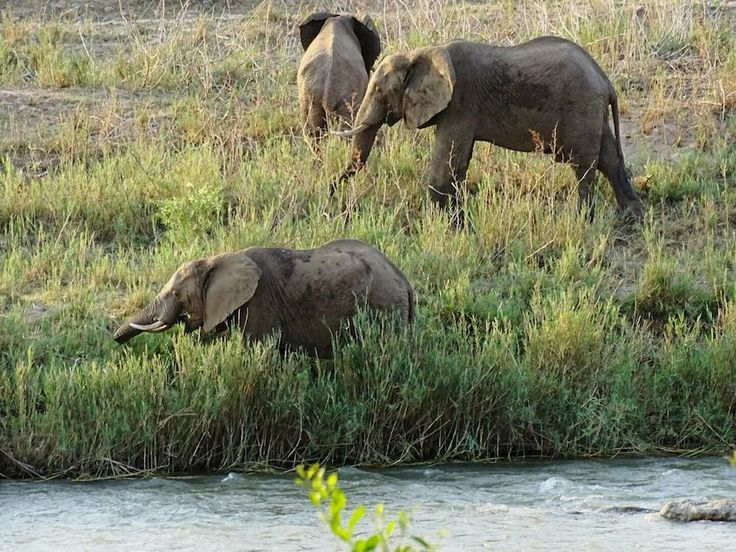Oliphant River South Africa Elephant