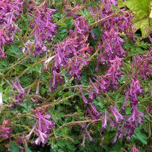 545 Best Zone 5 Gardening Images On Pinterest | Flower Gardening, Flowers  Garden And Garden Plants