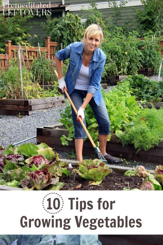 10 Tips for Growing Vegetables in your garden. You can grow and enjoy your own vegetables with a little planning and good maintenance. These gardening tips will show you how!