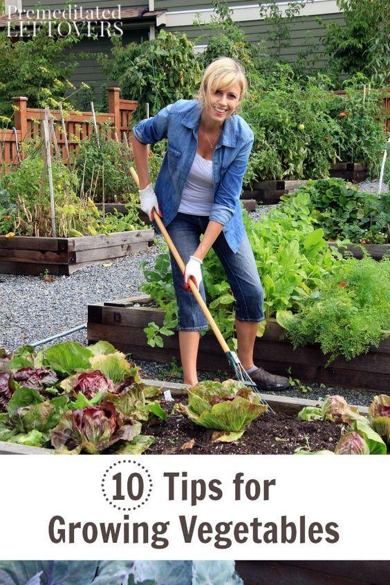 57 best images about veggie plot on pinterest gardens for Vegetable garden maintenance