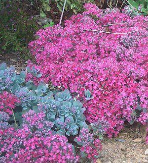 Flower Garden Ideas Full Sun 155 best flowers - full sun images on pinterest | flower gardening