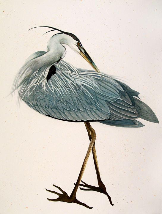 Paintings of a great blue heron by Scott Kelley of Portland, Maine