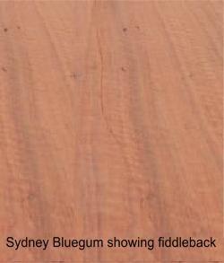 blue gum showing fiddleback grain