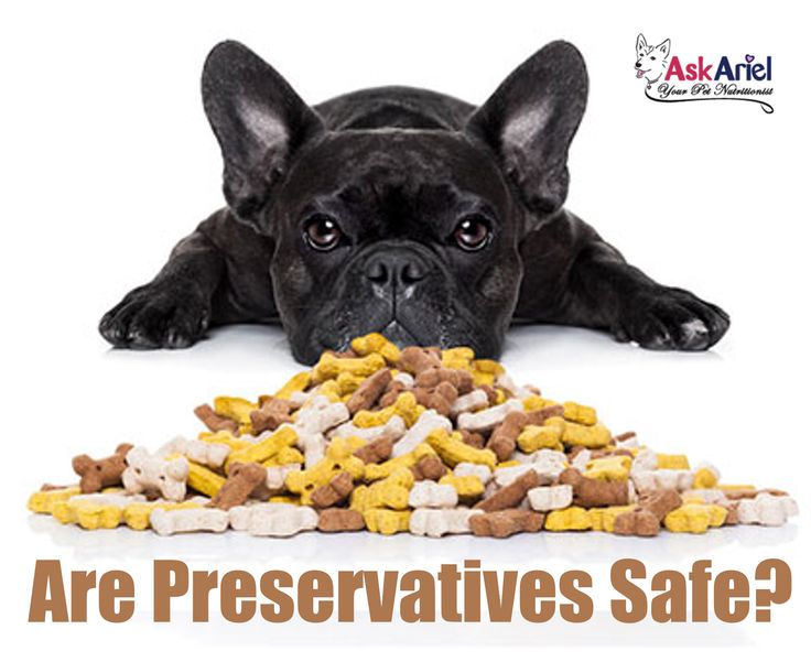 Animal fats are a part of pet foods treats but they