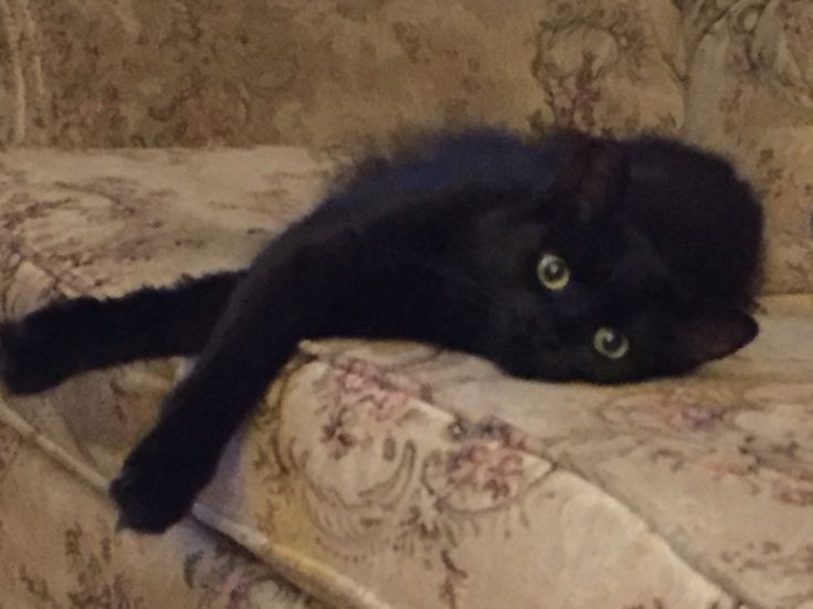 She looks like toothless the dragon.