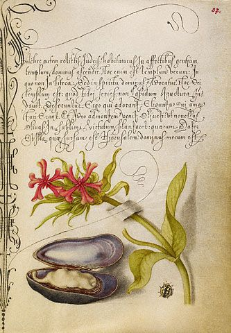 Maltese Cross, Mussel, and Ladybird Joris Hoefnagel, illuminator; Georg Bocskay, scribe, Flemish and Hungarian, illumination 1591-1596, script 1561-1562,