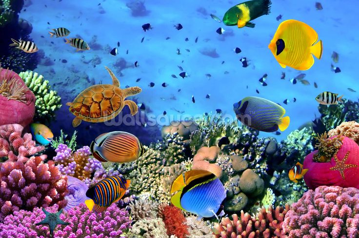 Photo of a Coral Colony wall mural