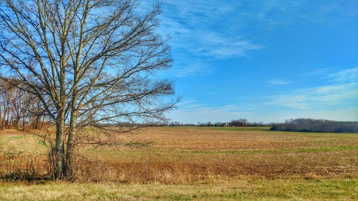 Stopped to find Leo's pacifier and snapped this #corn #crops #field #clouds #tree #bluesky #nature #naturelovers #tennessee #naturegram #photography #natureshots#harvest #autumntrees #nature_shooters