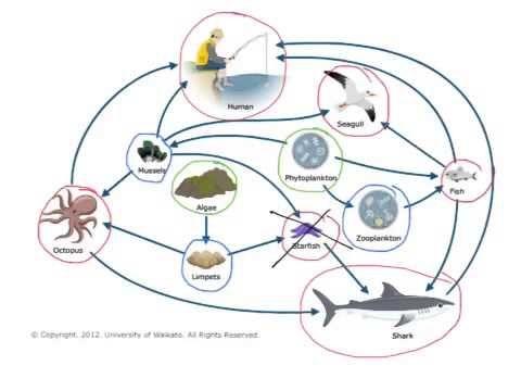 Food Webs & Energy Pyramids - YouTube
