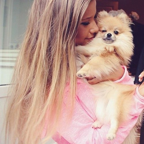 A Pomeranian who knows that she's loved....