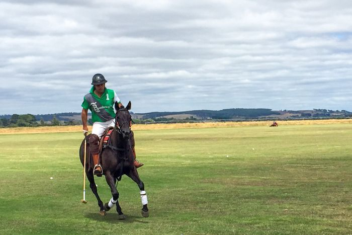 ABC News Tasmania's Barnbougle Lost Farm golf course to host state's first professional polo game
