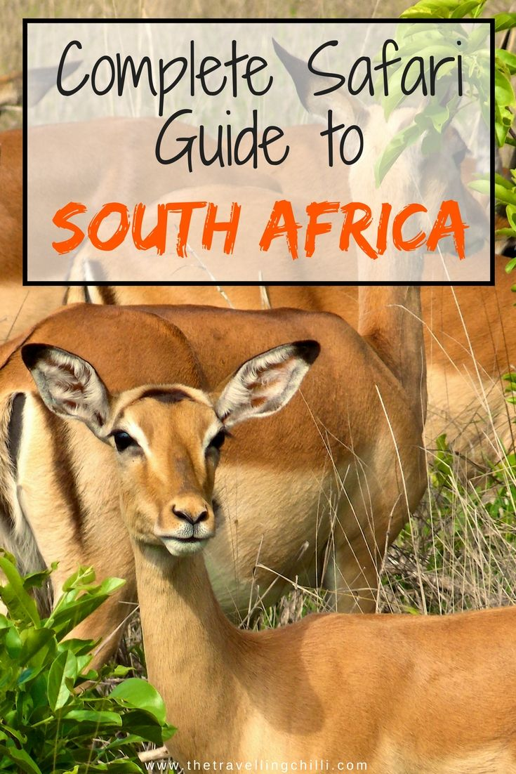 Complete Safari guide to South Africa - safari in South Africa ********************************************* safari in Africa | safari in kruger national park | big five | big five safari | safari parks in south africa