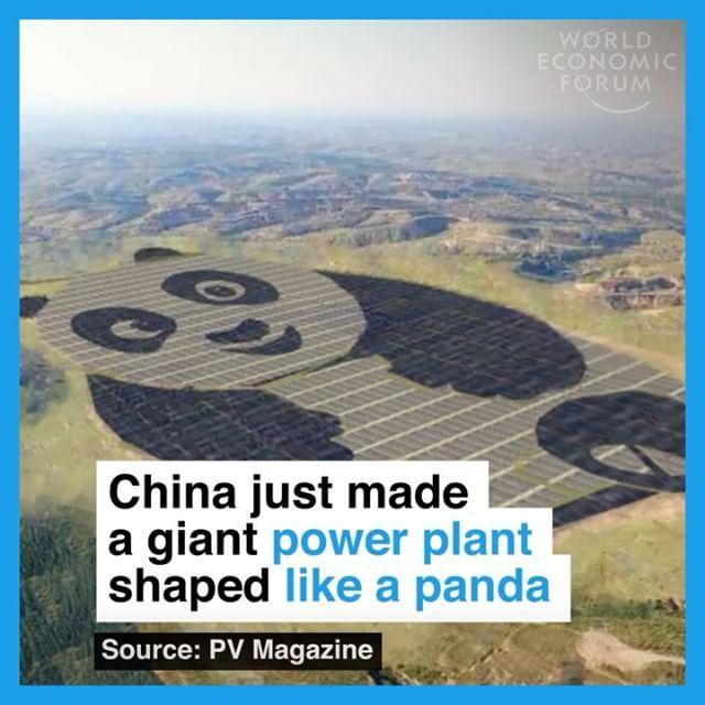 The world's cutest solar farm.