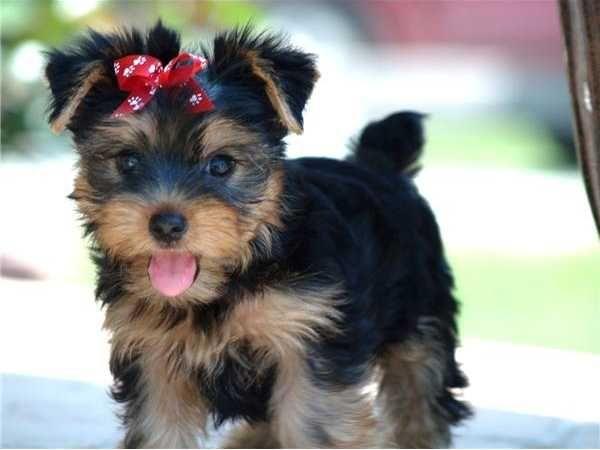 SOS Animal  com amor: Filhote de cachorro saiba  como educá-los