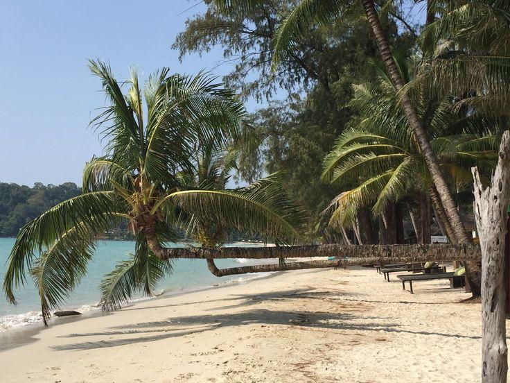 Koh Kood - palm tree had a few too many :)