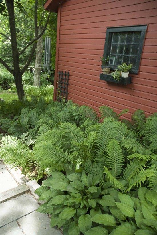 94 best Dry Shade Garden images on Pinterest