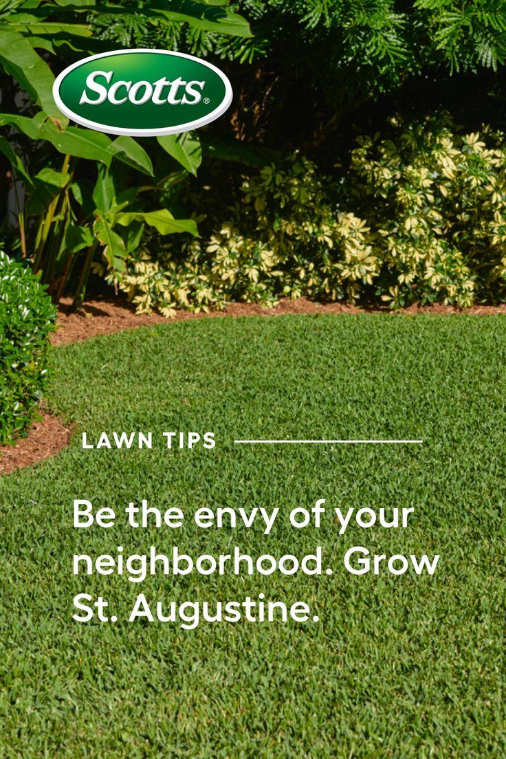 The hallmark bluegreen blades of grass in a St. Augustine