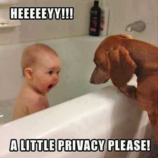 Dachshund is wondering why you would put the baby in a bath when she would gladly lick him clean for you.